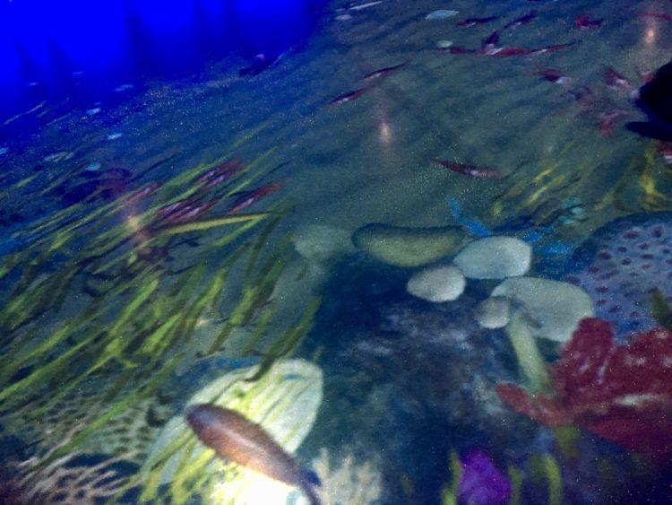 ウラジオストク 水族館内の床のCG