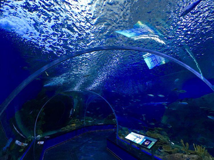 インスタ映えするウラジオストク水族館の水中トンネル