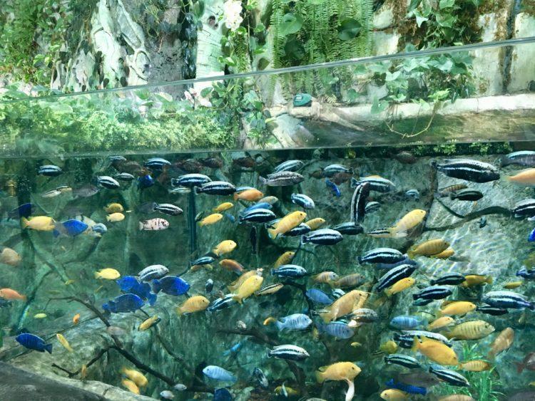 インスタ映えするウラジオストク水族館の超巨大水槽