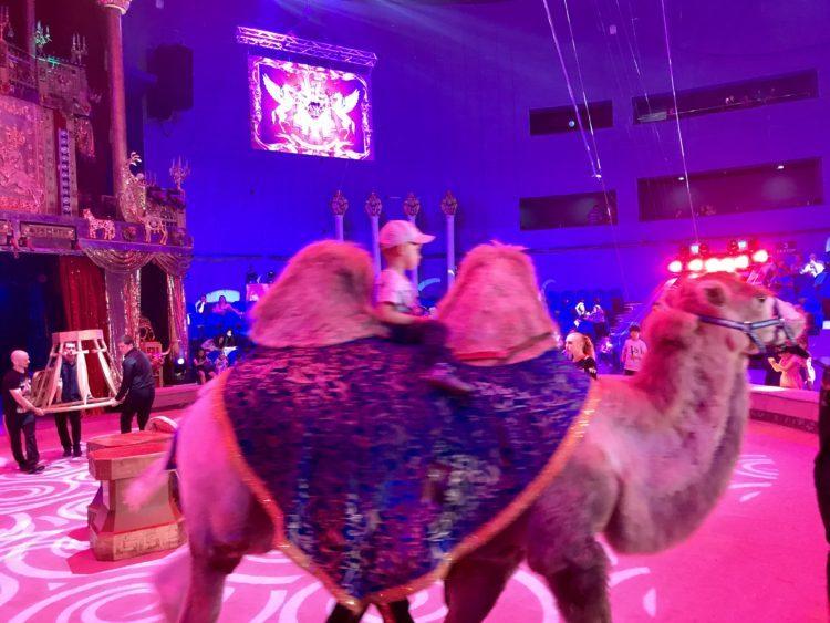 ウラジオストクサーカス休憩中はラクダに乗れます