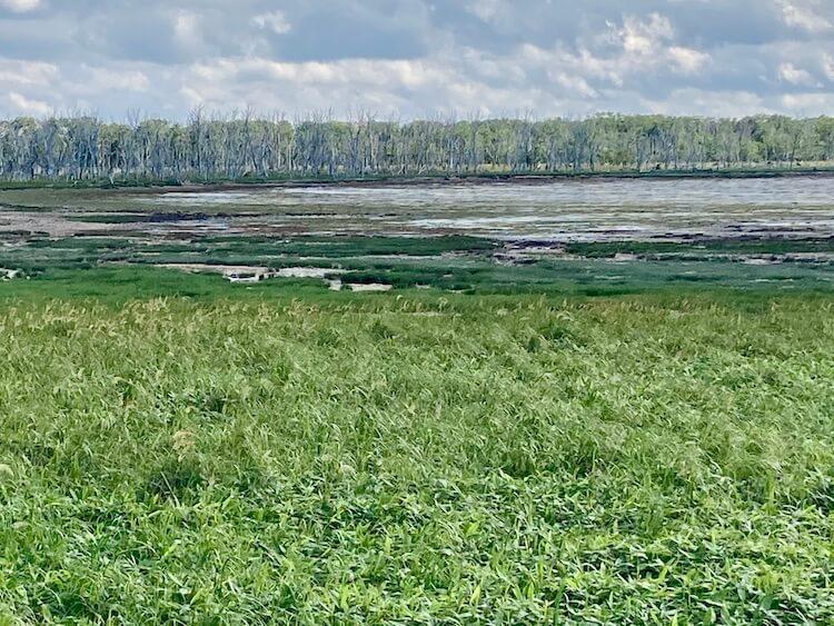 海水に侵食されて立ち枯れたトドマツはが見れるトドワラ