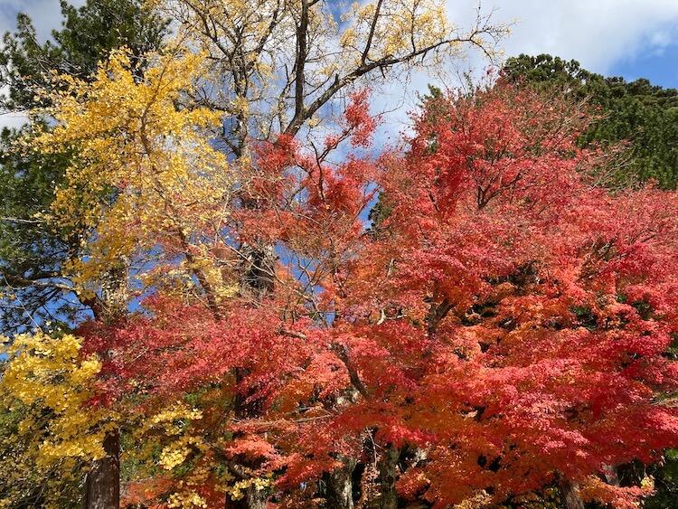 紅葉が見頃の高野山の画像をひたすらアップする 紅葉の高野山おすすめスポットその1 高野山大門から霊宝館へ