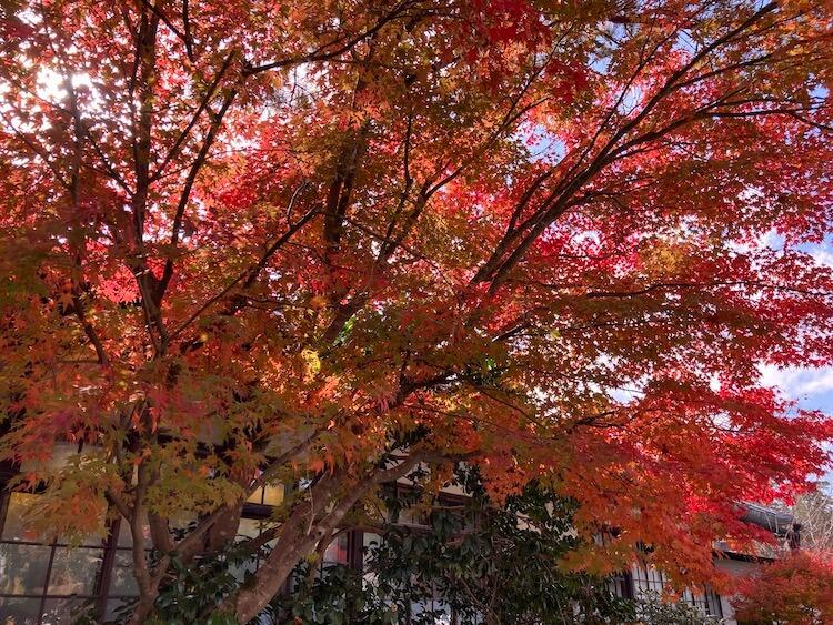 紅葉が見頃の高野山の画像をひたすらアップする 紅葉の高野山おすすめスポットその3 西宝院
