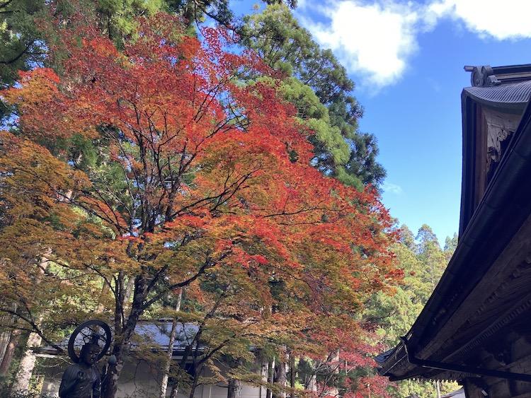 紅葉が見頃の高野山の画像をひたすらアップする 紅葉の高野山おすすめスポットその4 奥の院