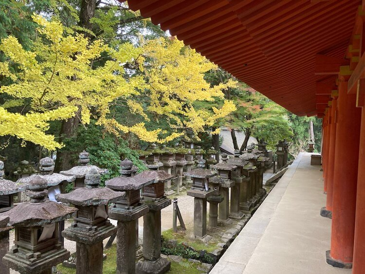 日本一周Nバン車中泊56日目 奈良公園〜春日大社の紅葉