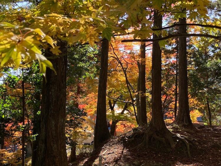 比叡山延暦寺の紅葉の見頃はいつ?延暦寺の紅葉の画像をひたすらアップする