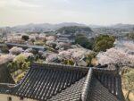 湯巡りNバン日本一周車中泊67日目 桜満開!春の姫路城