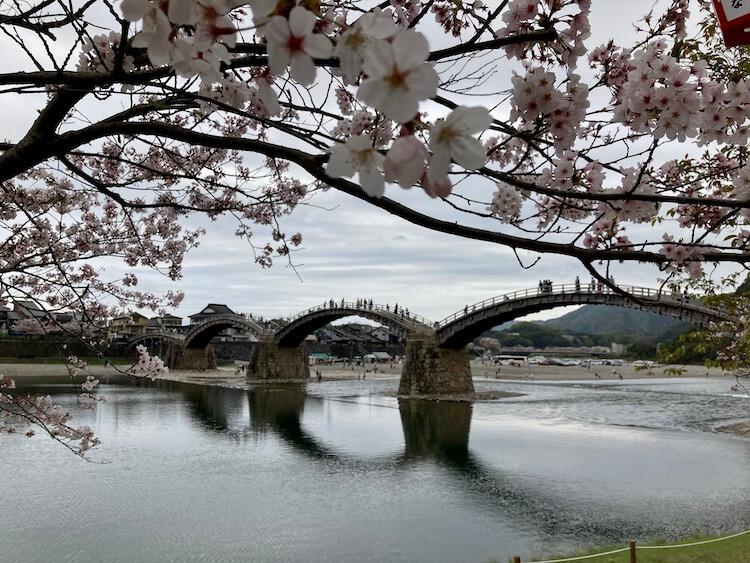 錦帯橋と満開の桜