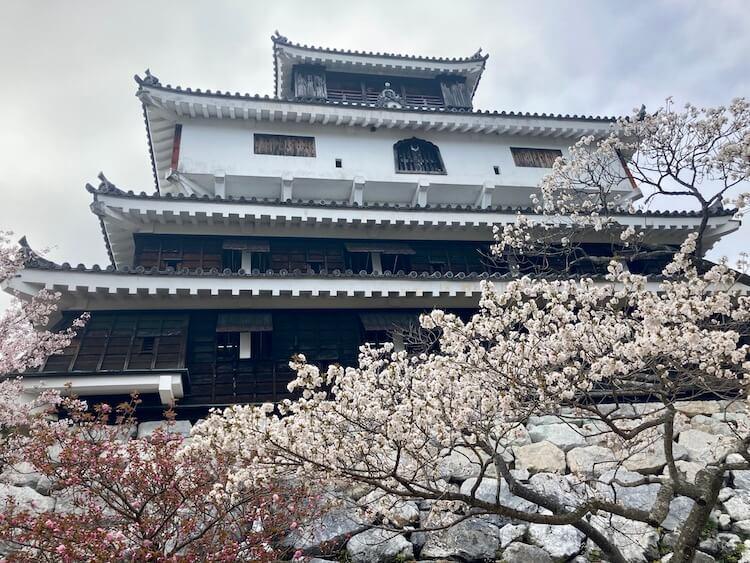 岩国城としだれ桜