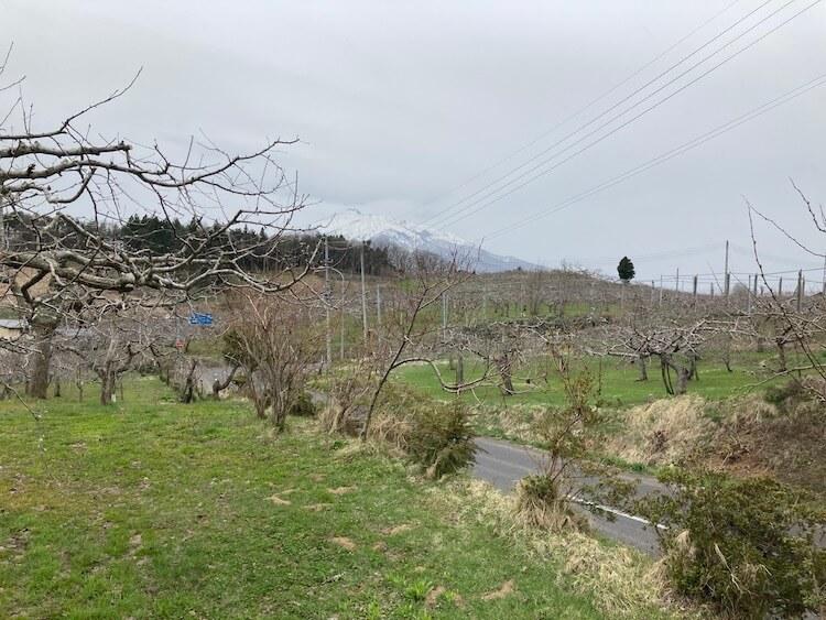 津軽半島の見渡す限り続くリンゴ畑