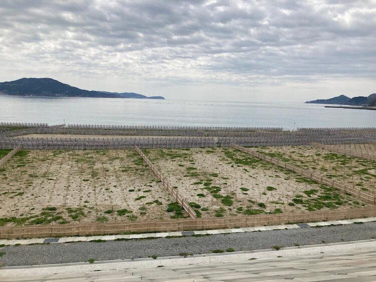 陸前高田東日本大震災津波伝承館 津波復興祈念公園 被災前の7万本の松林の再興を目指して、植樹された奇跡の一本松のこども苗