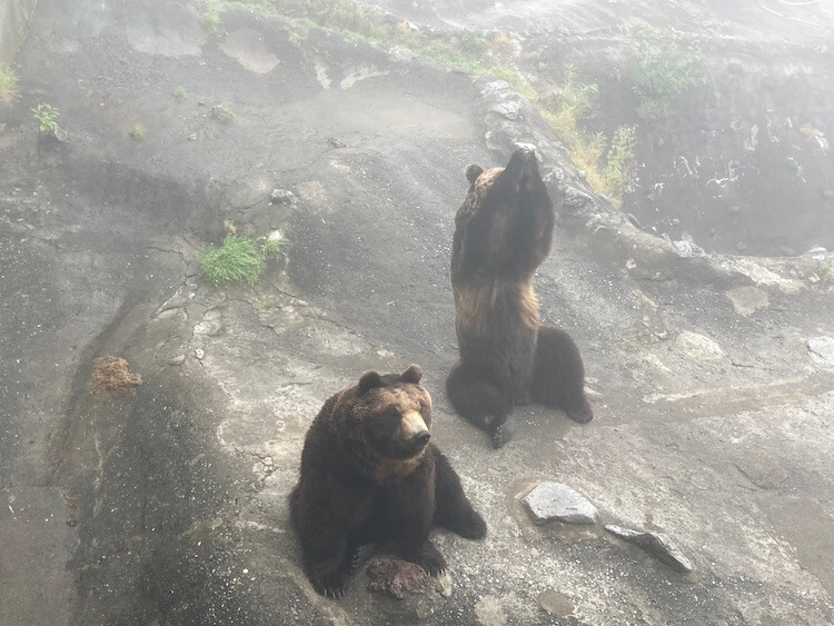 登別クマ牧場のクマと弁慶岬のエゾジカで動物ざんまい 登別クマ牧場でおやつをおねだりして合掌するヒグマ