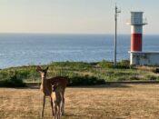 登別クマ牧場のクマと弁慶岬のエゾジカで動物ざんまい