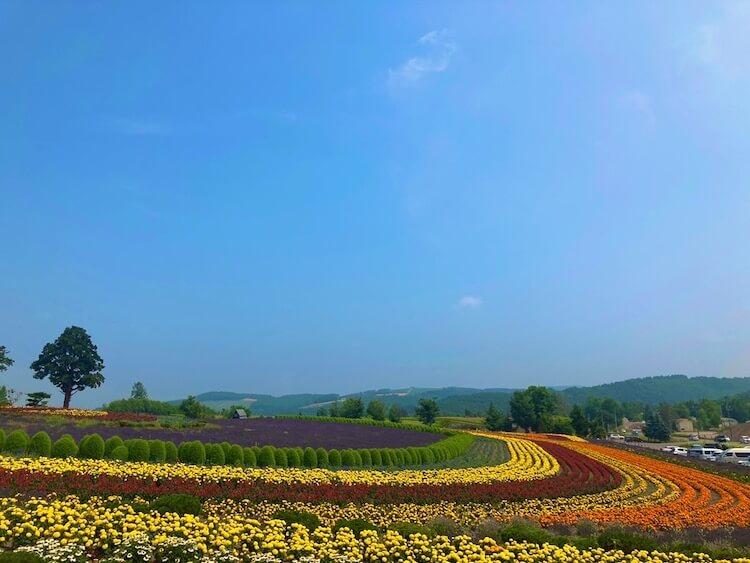 富良野・美瑛で絶対に行っておきたい絶景スポット その2 ゼルブの丘