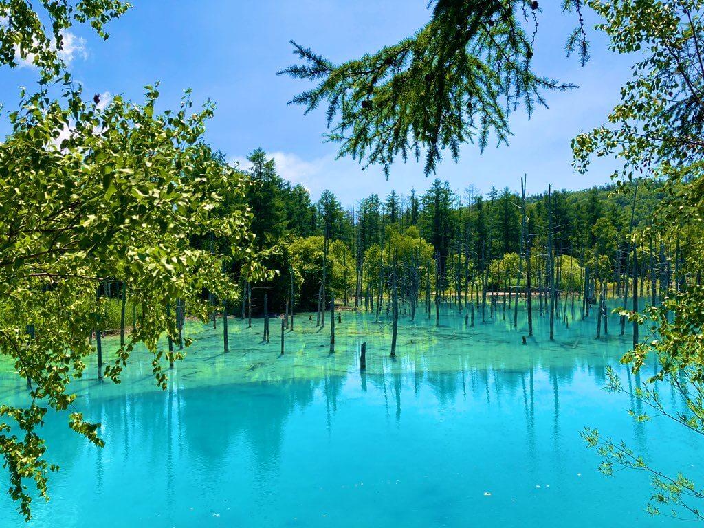 富良野・美瑛で絶対に行っておきたい絶景スポット その6 白金美瑛青い池と白ひげの滝