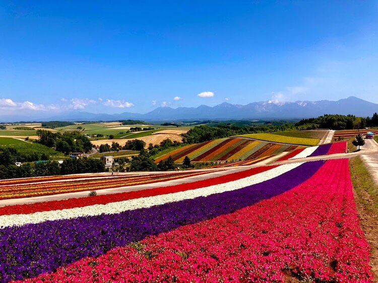 富良野・美瑛で絶対に行っておきたい絶景スポット その7 四季彩の丘